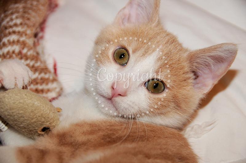 Max - My Beautiful Rescue Kitten, November 2016